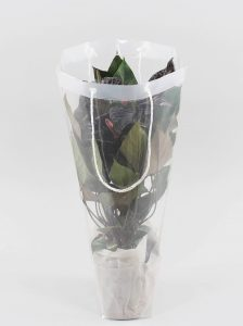 Anthurium Black Beauty in Draagtas met doek